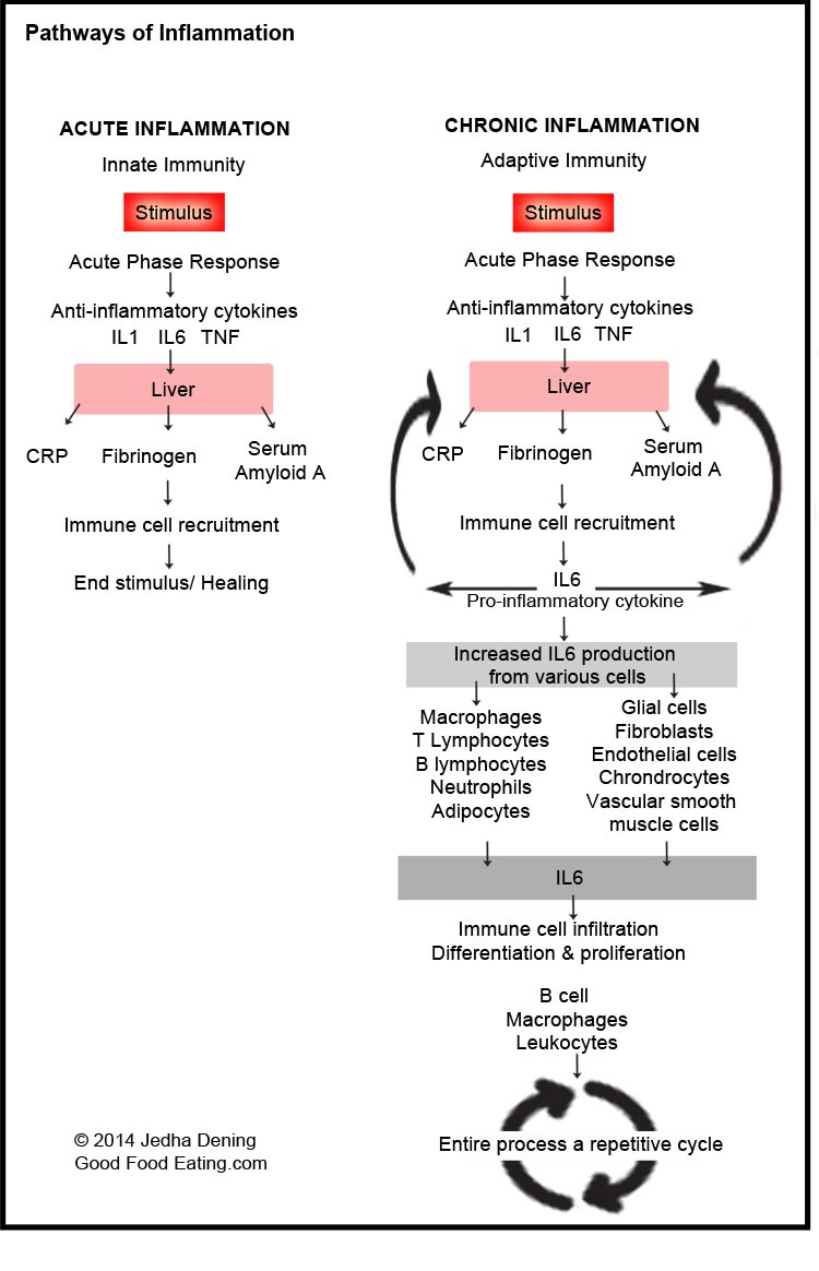Pathways-of-acute-and-chronic-inflammation