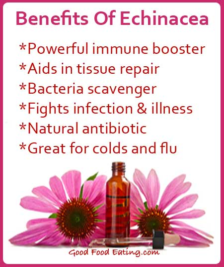 Benefits Of Echinacea