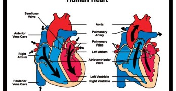 What is the difference between systolic and diastaolic blood pressure?